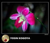 Frame Dari Gallery Photography Indonesia Kategori Human Flowers