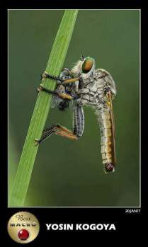 Frame Dari Gallery Photography Indonesia Kategori Macro